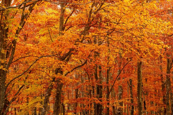 Autumn Term 1